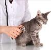 Ветеринарные клиники в Решетниково